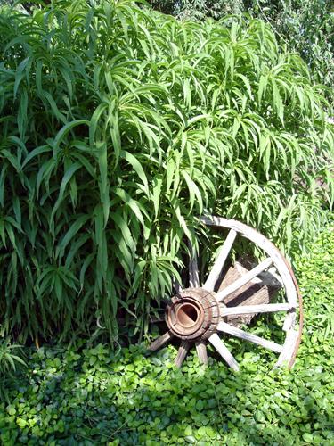 wagonhwheel[1]